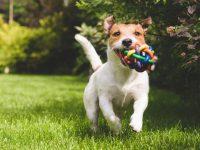 Tips på bra hundnamn