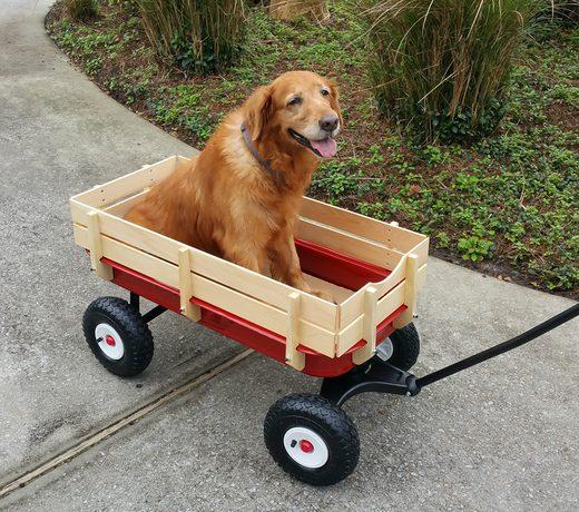 Den åldrande hunden